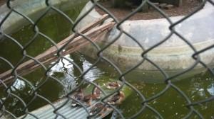 patikka-zoo