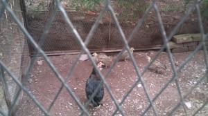 mini-zoo-in-patikka-50km-away-from-kohala-bridge-muzaffarabad