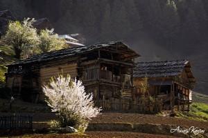 Tao-bat-taobat-neelum-valley-azad-kashmir-ajk