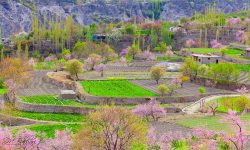 7 Days Honeymoon and Family tour package to Gilgit and Hunza