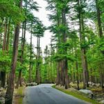 Places_To_Visit_in_Swat_Ushu_forest-min
