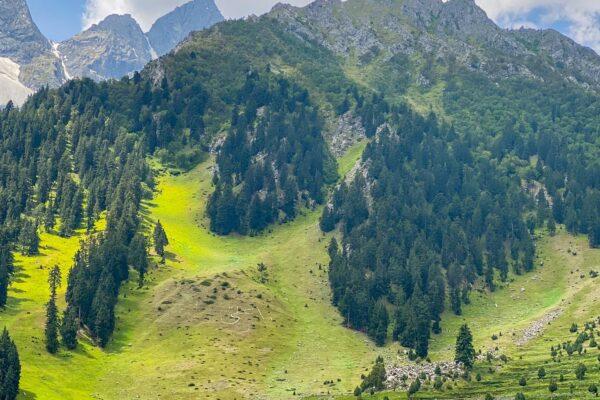 2-Blue-Lake_Naltar-Gilgit_Baltistan_